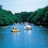 井の頭公園は別れの名所?カップルでボートに乗ると別れる?